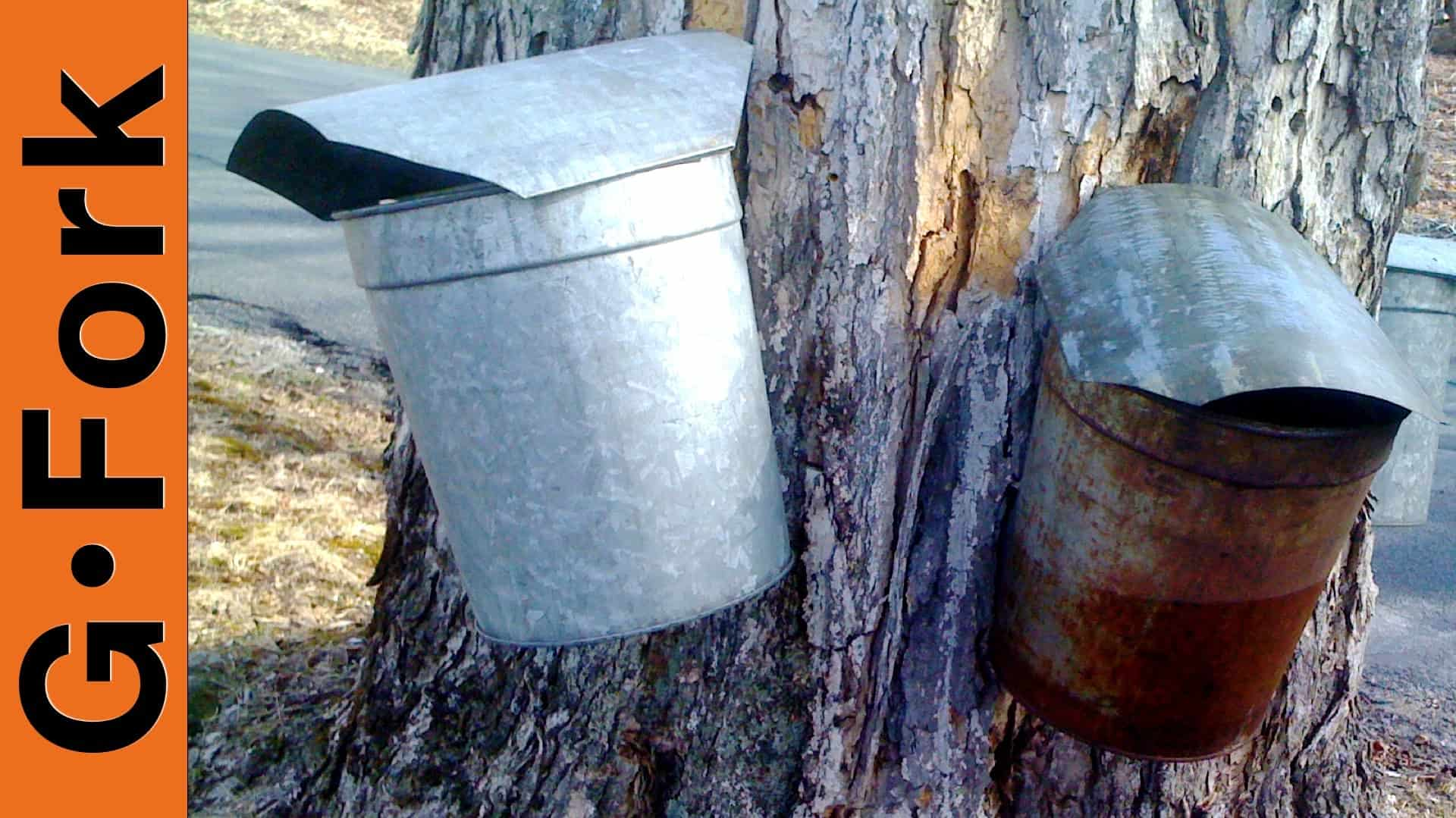 9066d301514 Tap maple trees with tin sap buckets   GF Video - GardenFork - Eclectic DIY
