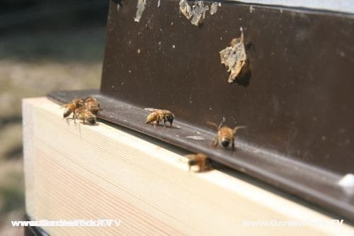 Bees trying to enter hive under warped feeder