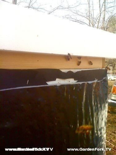 Bees entering thru inner cover gap