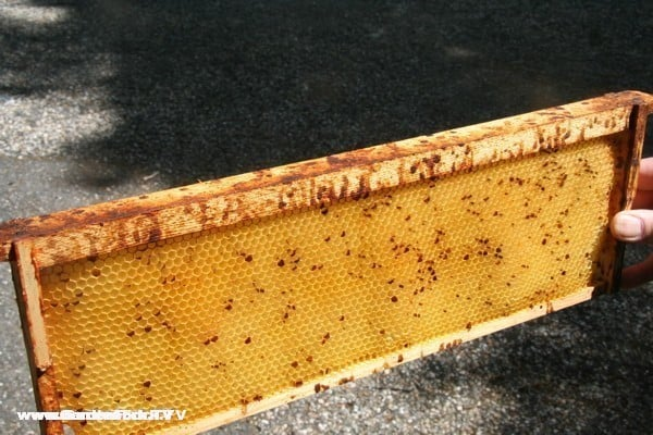 You don't usually see comb spotted with bee droppings