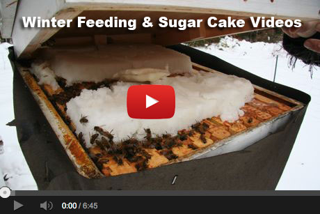 beekeeping-sugarcake-vid-thumb