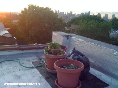 This is the start of about 6 large planters on the roof. Manhattan is on the right in the background.