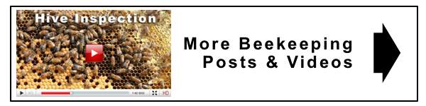 more beekeeping videos insert