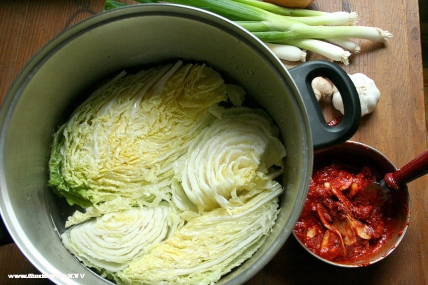 Kimchi preparation