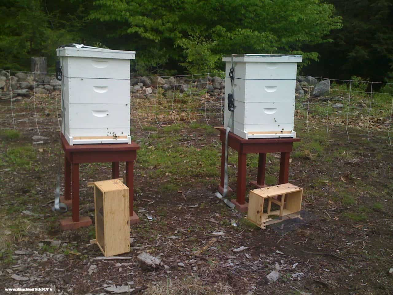 New Beehives In Our Second Beeyard Bearproofing The