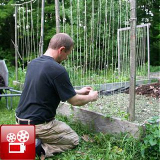 Build A Trellis - GardenFork.TV