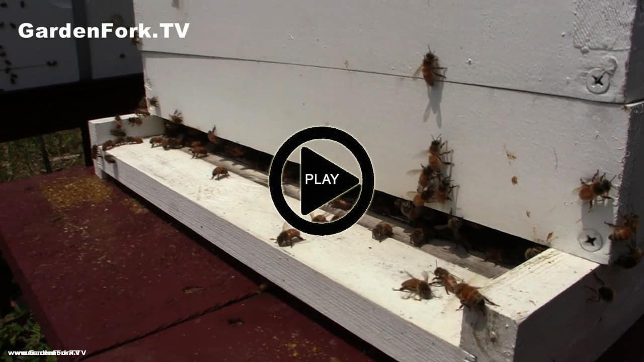 Beehive Ventilation Beekeeping 101 Gf Tv Gardenfork Tv