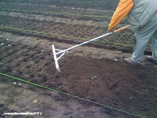garlic planting tool