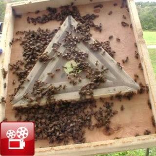 Bee Escape
