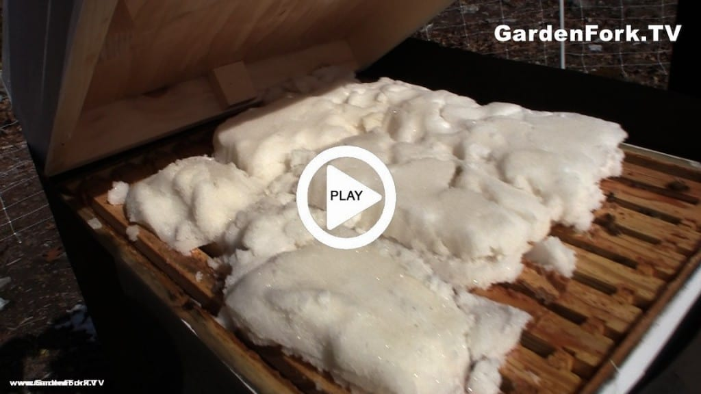 Sugar Cakes For Feeding Bees