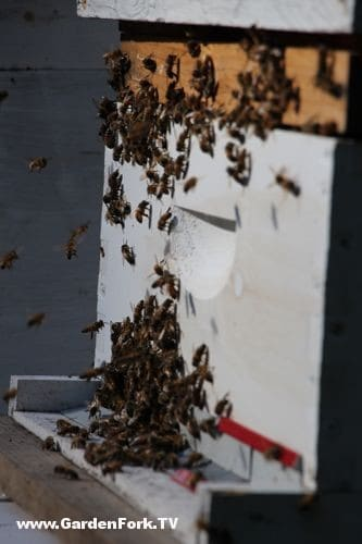 bee-swarm-capture-gf-video