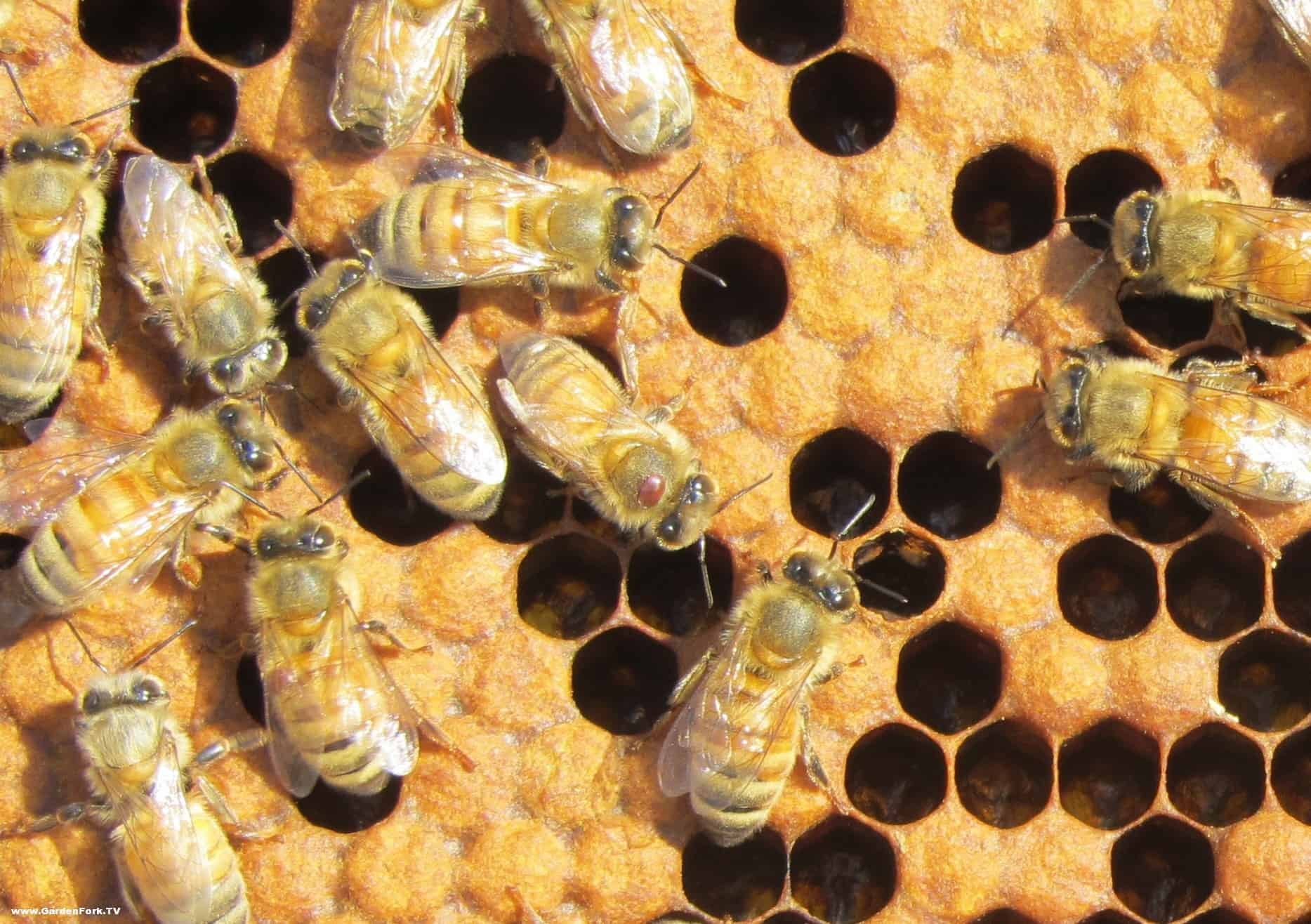 Inside the Hive: Views from a First Year Beekeeper (Scene 20)