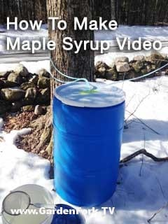 maple-syrup-update
