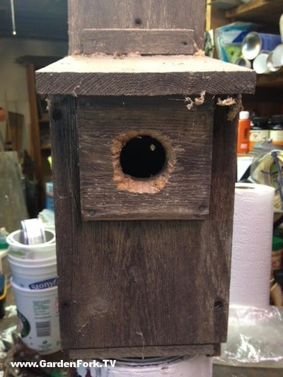 Chewed Out Birdhouse Hole