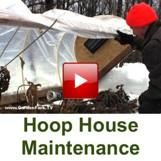 hoop house cold frame
