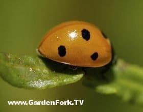good-garden-bugs