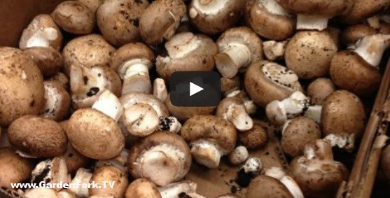 mushroom-foraging-3