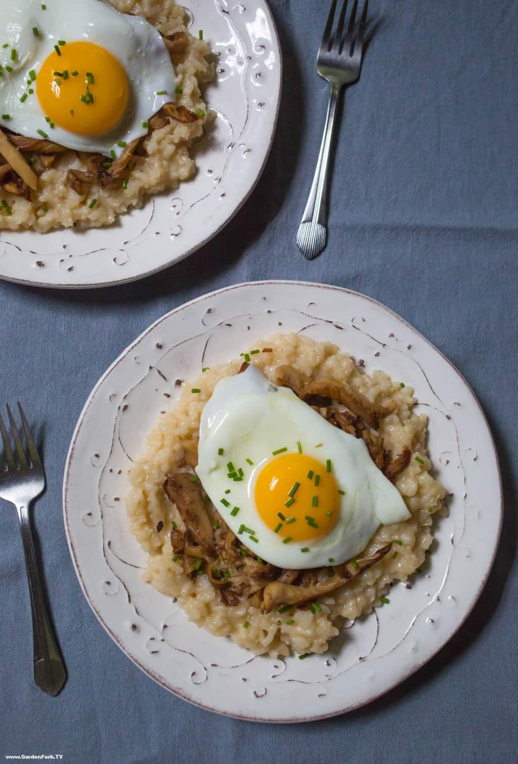 foraged oyster mushroom risotto | GardenFork