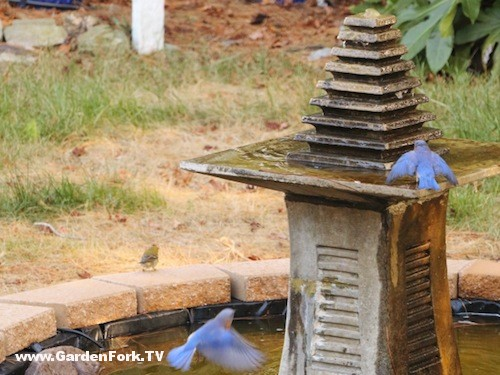 Rick's Water Feature with Bluebirds