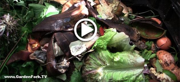 composting-101-backyard-composting-basics