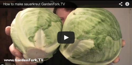 how-to-make-sauerkraut-gf-tv-3