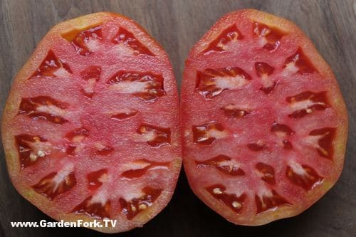 how-to-save-tomato-seeds-2