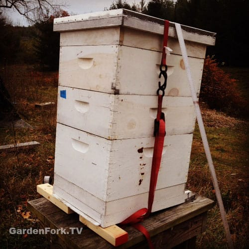 winter-beekeeping-preparation-checklist-5-things-1