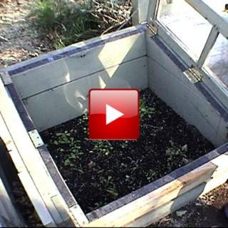 cold frame gardening