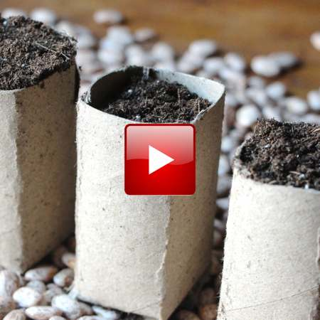 cardboard seed starting pots feature