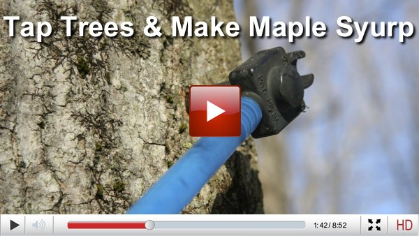 maple syrup videos