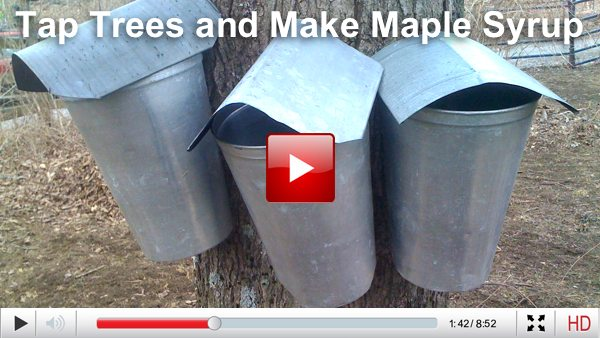 make maple syrup
