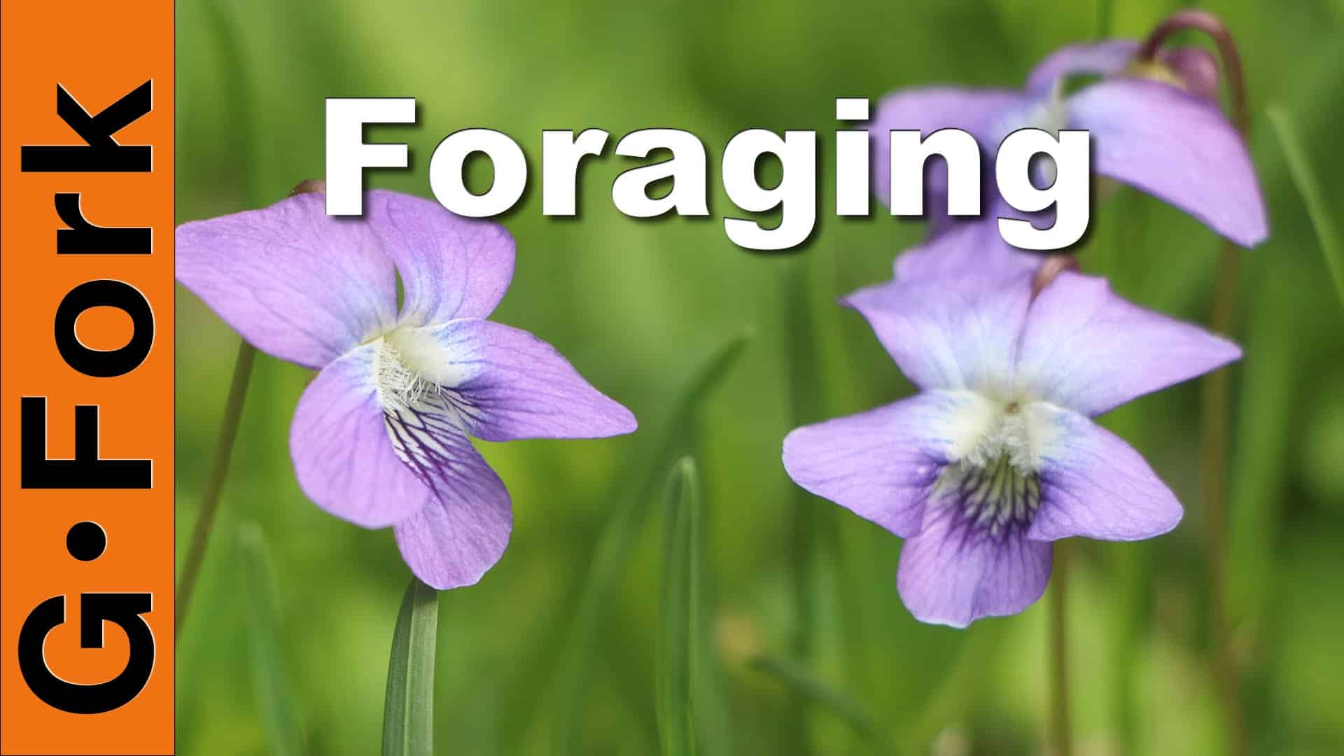 foraging for edible wild plants in the backyard gf video diy