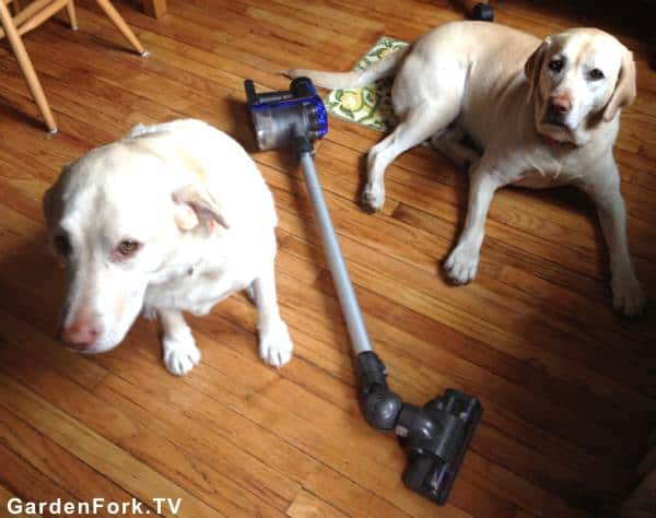 best house cleaning tip for dog hair