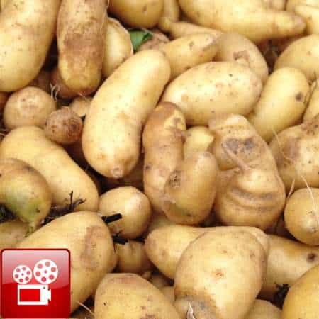 hill potatoes feature