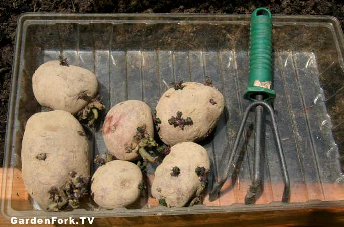 how-to-grow-potatoes-2