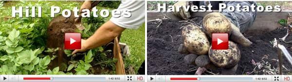 potato video insert 2