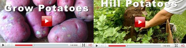 potato video insert 3