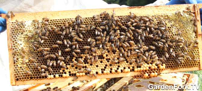 Hive Inspection Beekeeping 101