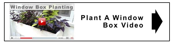 watch more plant a window box video