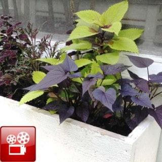 plant a window box