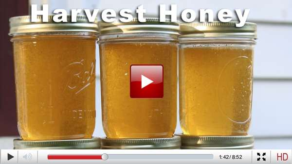 honey harvest email