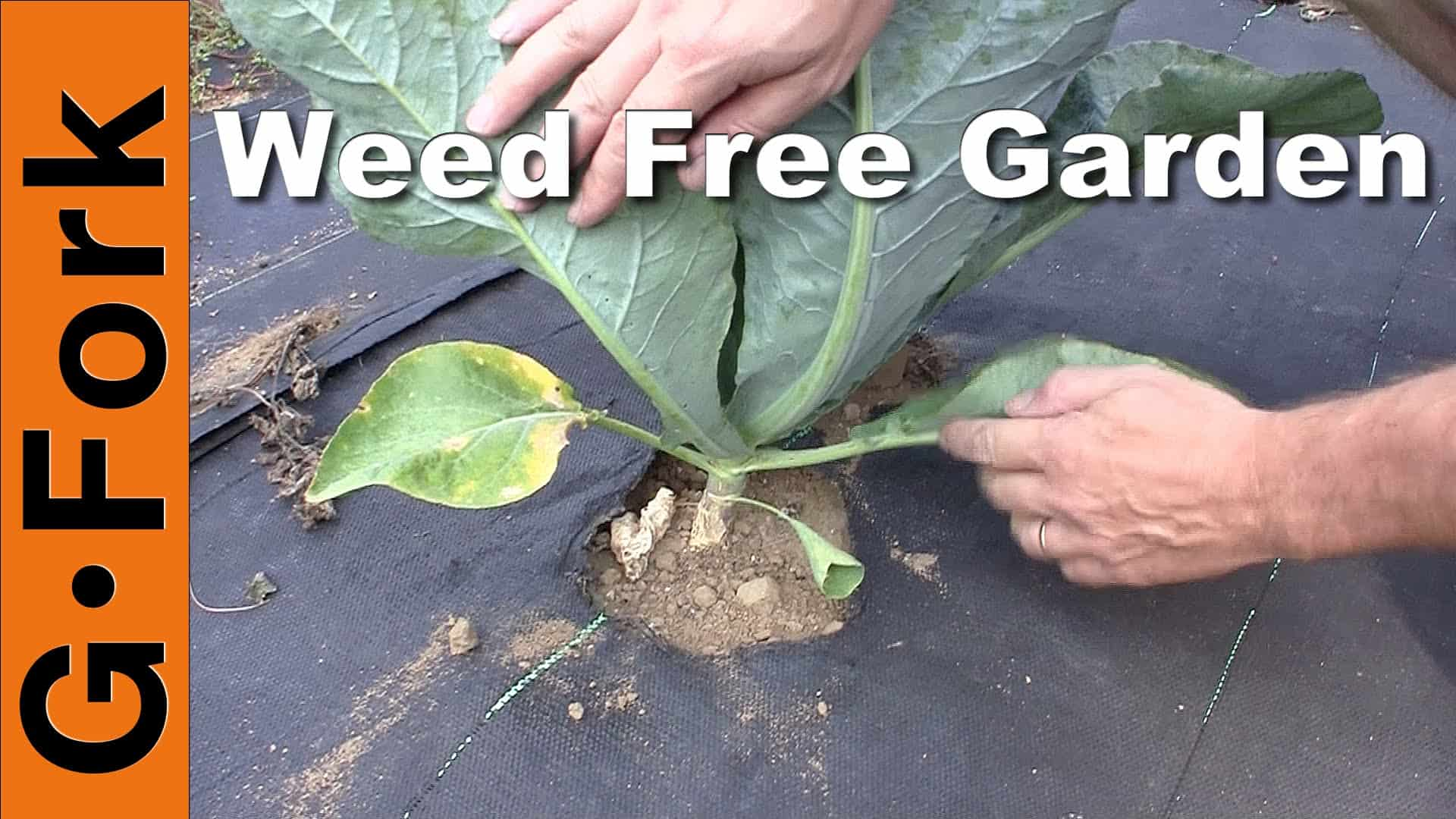 Weeds in flower beds with potato like roots - Natural Weed Control In The Vegetable Garden Gf Video Diy Living Gardenfork Tv