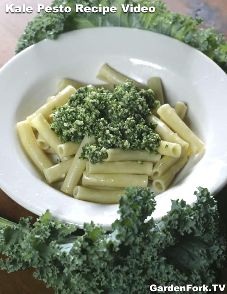 Easy Kale Recipe