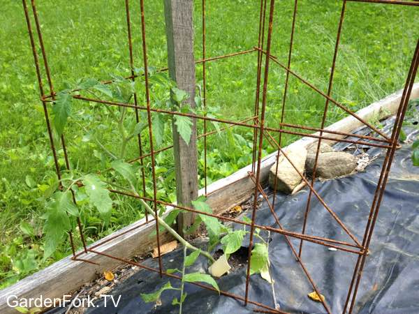 Best Homemade Tomato Cages