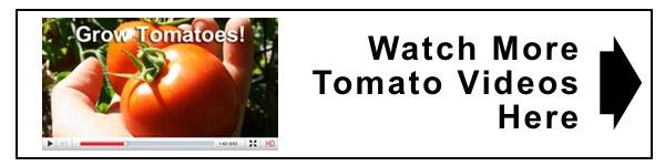 watch tomato videos 2