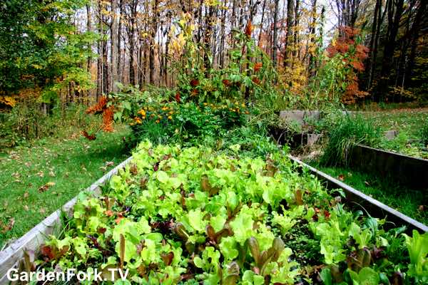 Grow Salad Greens In Fall and Winter
