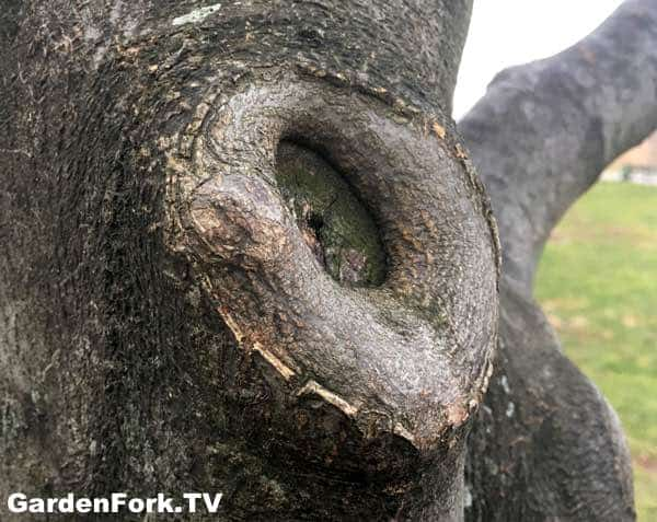 Tree Pruning How To