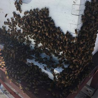 Beekeeping Meltdown