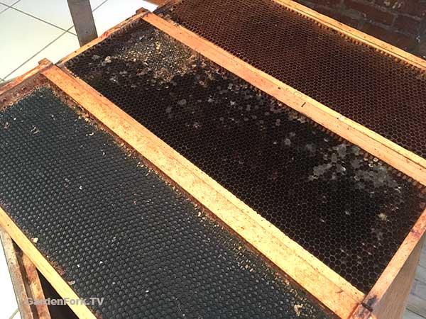 Quick Swarm Traps