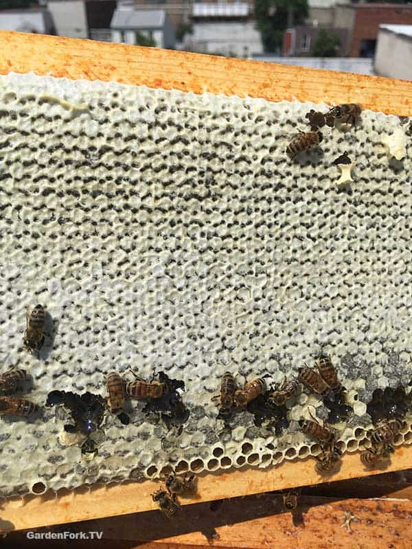 different color honey cappings